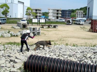 救助犬 (3)